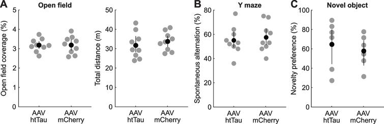 AAV-induced tau pathology did not result in detectable behavioral impairments. A) Mice infected with AAV-hSYn-htTau (n=9) and AAV-hSyn-mCherry (n=9) covered the same percentage of area in the behavioral arena (left, p=0.976) and traveled the same total distance during open-field testing (right, p=0.472). Field coverage: AAV-htTau mean=3.18, CI=2.99–3.39; AAV-mCherry mean=3.19, CI=2.90–3.48; Total distance: AAV-htTau mean=31.69, CI=28.09–36.48; AAV-mCherry mean=33.72, CI=30.88–36.57. B) Percentage of spontaneous alternations in Y-maze was comparable in both populations of mice (p=0.661, n=9 in both groups). AAV-htTau mean=55.00, CI=49.11–62.20; AAV-mCherry mean=57.44, CI=51.11–64.81. C) Mice infected with AAV-hSyn-thTau (n=6) and AAV-hSyn-mCherry (n=6) displayed the same overall preferences for novel objects (p=0.598). AAV-htTau mean=64.56, CI=44.28–80.11, AAV-mCherry mean=57.80, CI=42.76–68.78. Gray circles in all panels correspond to individual animals, black circles and error bars show means and bootstrap estimates of 95% confidence interval of the mean.