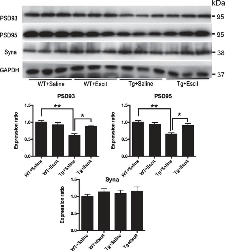 The effects of escitalopram treatment on synapse-associated proteins in mice hippocampus.< /b>Western blotting and quantitative analysis for the levels of PSD93, PSD 95, and synaptophysin measured in mice hippocampus. GAPDH was used as a loading control in each sample. The results are expressed as the mean±SEM (n = 3); WT + saline: the wild-type mice administered with the saline vehicle; WT + Escit: the wild-type mice administered with escitalopram; Tg + Saline: pR5 AD mice administered with the saline vehicle; Tg + Escit: pR5 AD mice administered with escitalopram. *p < 0.05; **p < 0.01.