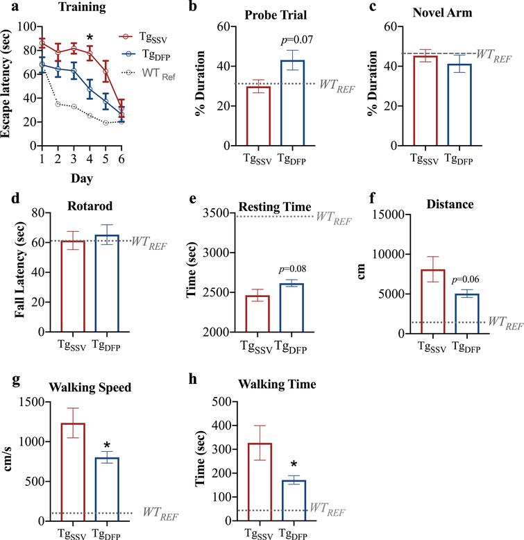 Effect of DFP on behavior. a) MWM performance in escape latency between treatment groups. b) Unpaired t-test revealed a trend towards improved cognitive performance in the probe trial in DFP treated mice. c) Unpaired t-test shows no difference in the percentage duration spent in the novel arm in Y-maze and d) Unpaired t-test shows no difference in performance in the rotarod. In the open field test, unpaired t-test revealed a trend toward increased (e) total resting times and a decrease in the (f) total distance travelled. Furthermore, (g) average walking speed and (h) total walking time were significantly decreased in DFP treated rTg4510 mice. Dotted lines indicate mean WT reference performance for parameters analyzed. Vehicle treated rTg4510=TgSSV; DFP treated rTg4510=TgDFP. *p<0.05. n=7– 10/group.