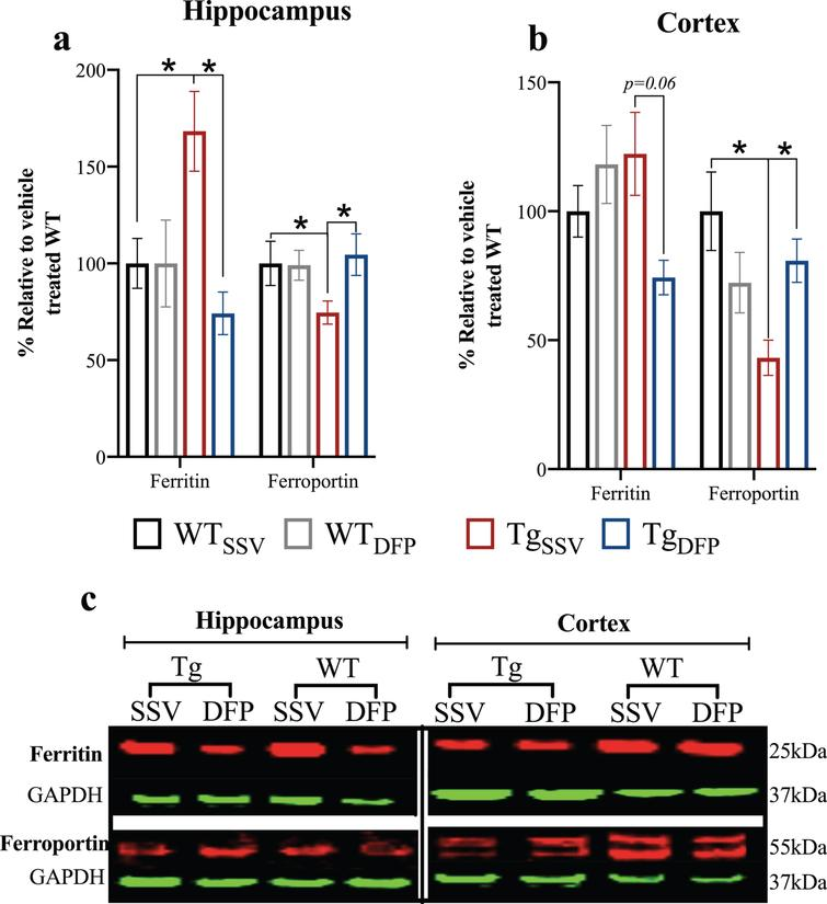 Effect of DFP on ferritin and ferroportin protein levels. In the hippocampus (a) and in the cortex (b). Vehicle treated rTg4510=TgSSV; DFP treated rTg4510=TgDFP. Vehicle treated WT=WTSSV; DFP treated WT=WTDFP. c) Representative western blot images. Error bars represent±SEM. *p<0.05. n=5/group.