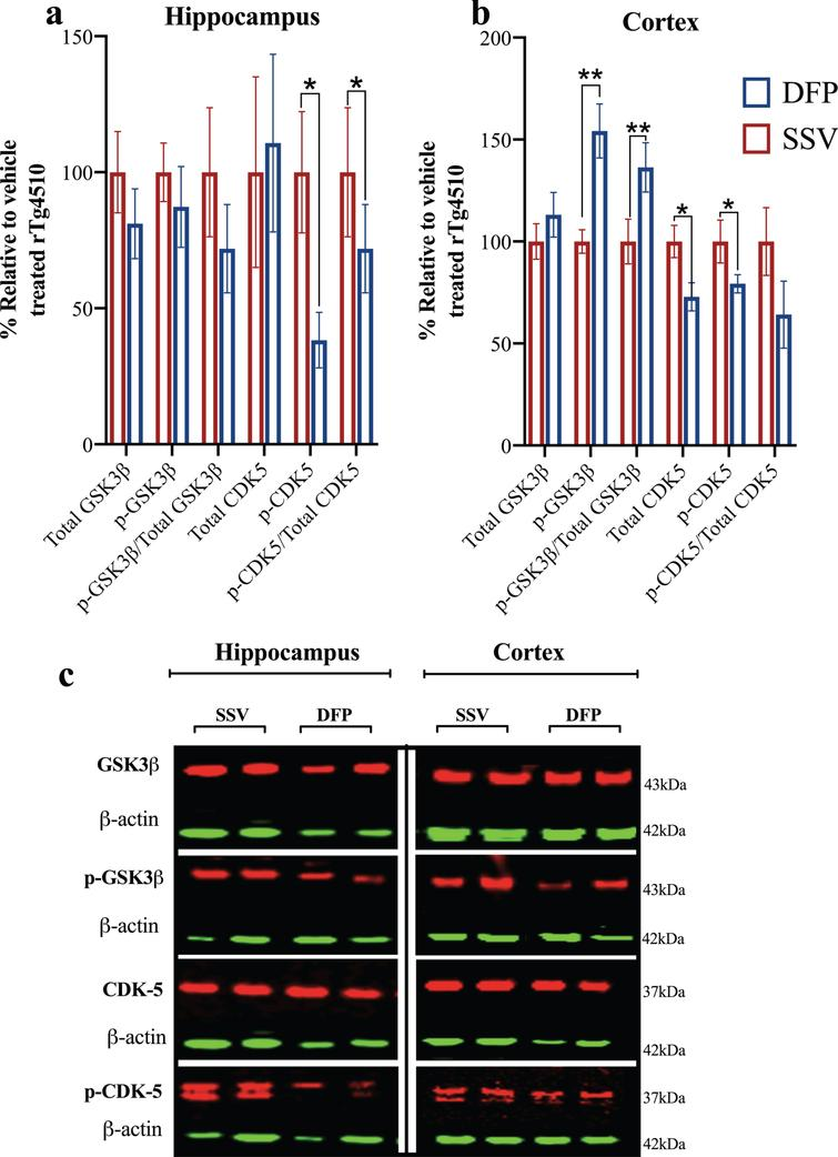 Effect of DFP on tau kinases. Western blot was used to examine tau kinases in the (a) hippocampus and (b) cortex. c) Representative western blots of tau kinases. Vehicle treated rTg4510=TgSSV; DFP treated rTg4510=TgDFP. Unpaired t-test; Error bars represent±SEM. *p<0.05; **p<0.001. n=5– 6/group.