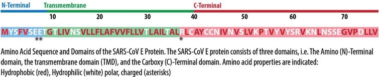 Illustration SARS-CoV Protein E. Adapted from [15]. Illustrated by Dr. Joe Bolanos.