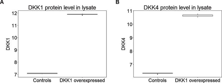 DKK1 overexpression leads to higher levels of (A) DKK1 and (B) DKK4 expression in HEK293A cell lysate (n = 5 per condition). Y axis represents the log transformed of proteins expression abundance measured by Somascan assay.