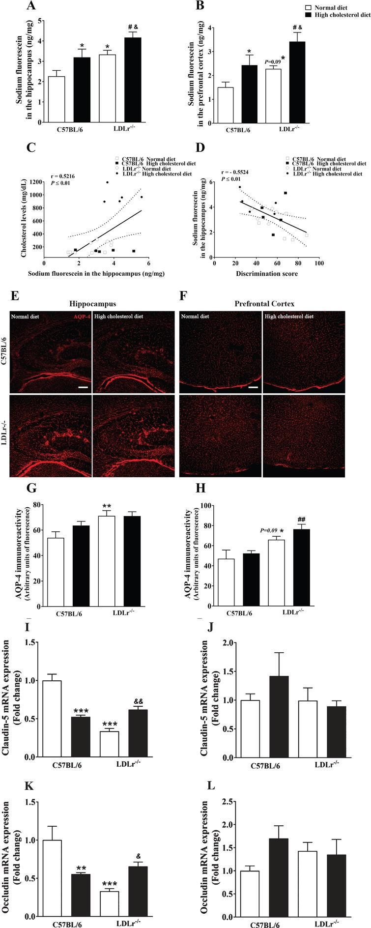 Effects of high cholesterol diet on blood-brain barrier (BBB) integrity of C57BL/6 wild-type and LDLr–/– mice. BBB permeability to sodium fluorescein in the (A) hippocampus and (B) prefrontal cortex of wild-type and LDLr–/– mice fed with normal or high cholesterol diet (n=6–7). C) A significant correlation between cholesterol levels and permeability to sodium fluorescein in the hippocampus. D) A Significant correlation between BBB permeability to sodium fluorescein in the hippocampus and discriminatory score (Pearson's correlations). Representative images of aquaporin-4 (AQP-4) content immunofluorescence analysis in the (E) hippocampus and (F) prefrontal cortex of the animals. The serial stack of images of AQP-4 (red) immunofluorescence staining were obtained with a Leica DMI6000 B confocal microscope. Scale bars, 150μm. Quantitation of AQP-4 immunoreactivity in the (G) hippocampus and (H) prefrontal cortex (n=4–5). Gene expression of tight junction's protein, claudin-5 and occludin, in mice's (I and K, respectively) hippocampus and (J and L, respectively) prefrontal cortex (n=5). Data are expressed as the mean±SEM. *p<0.05, **p<0.01, and ***p<0.001 compared with C57BL/6 mice fed with a normal diet, #p<0.05 and ##p<0.01 compared with C57BL/6 mice fed with a high cholesterol diet, and &p<0.05 and &&p<0.01 compared with LDLr–/– mice fed with a normal diet (Two-way ANOVA followed by Duncan post-hoc test).