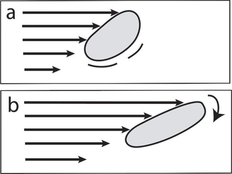 a) Laminar shear flow: flexible molecule undergoing stretching, distortion, chemical excitation, and molecular rotation. b) Later time than (a) showing direction of rotation.