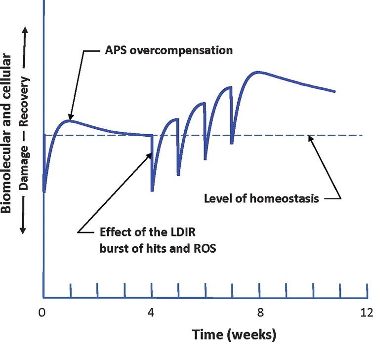 Response of the patient to a burst of damage caused by an LDIR treatment. Repeated treatments result in a hypothesized strengthening of the performance of the adaptive protection systems (APS) as they adapt to repeated bursts of LDIR damage. These stronger systems produce some recovery from the buildup of endogenous oxidative damage that causes Alzheimer's disease. Their enhanced performance is expected to last for months [19, 29–31].