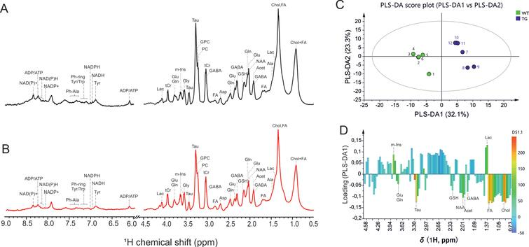 Representative high-resolution magic angle spin (HR-MAS) NMR spectra showing metabolic profile of SCN from (A) wild-type, and (B) Tg2576 mice. C, D) Multivariate analysis of the HR-MAS NMR spectra (n=6 per group) using partial least square-discriminant analysis (PLS-DA) modelling (R2=0.907, Q2=0.989). C) Scores plots (PLS-DA1 versus PLS-DA2). The score plot explains 55.4%of total variance of WT SCN clustering in the negative PLSDA1 scores, and Tg2576 SCN in the positive PLSDA1 scores. D) Loading plots of PLS-DA1 for all buckets containing assigned peaks. Ala, alanine; Asp, aspartate; Chol, cholesterol; FA, fatty acids; GSH, glutathione; GABA, g-aminobutyric acid; Glu, glutamate; Gln, glutamine; GPC, glycerophosphocholine; Gly, glycine; Lac, lactate; m-Ins, myo-inositol; PC, phosphocholine; Tau, taurine; tCr, total creatine.