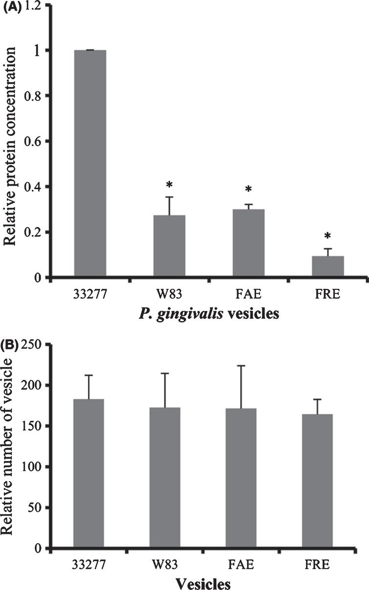 Expression of Hgp44 and FimA protein in P. gingivalis vesicles. A) Levels of FimA and Hgp44 of gingipains in surface extracts (SE) of Pg33277 or an afimbriated strain (W83), and in vesicles (V) of 33277, W83, fimAmutant (FAE), and fimRmutant (FRE) were analyzed using western blot analysis with rabbit anti-FimA or rabbit anti-Hgp44 sera. Reprinted with permission from Mantri CK, Chen CH, Dong X, Goodwin JS, Pratap S, Paromov V, Xie H (2015) Fimbriae-mediated outer membrane vesicle production and invasion of Porphyromonas gingivalis. Microbiology Open 4, 53–65, under the terms of the Creative Commons CC BY license.
