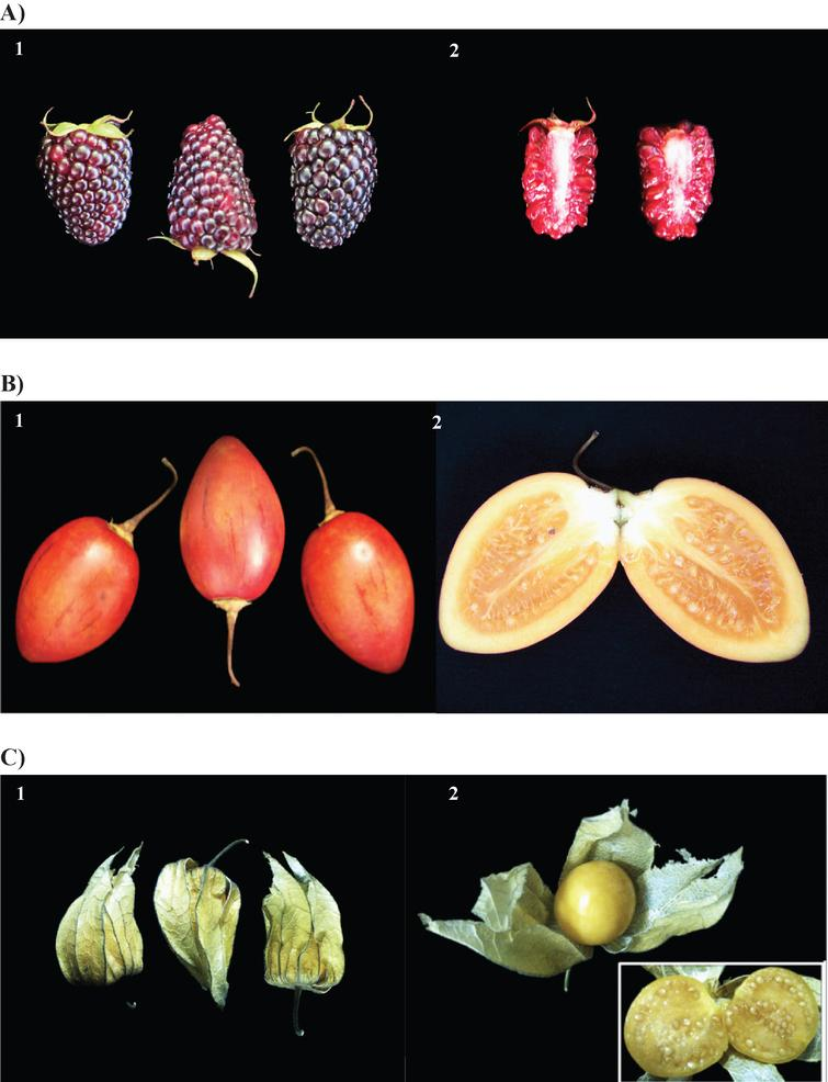 Whole (1) and halved (2) Rubus glaucus (A), Solanum betaceum (B) and Physalis peruviana (C) fruits.
