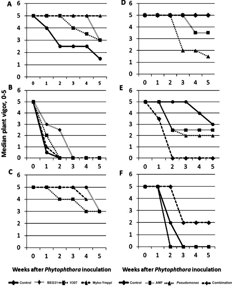 Weekly development of median plant vigor in Phytophthora inoculated plants (N = 6) in Experiments 1 and 3 on different growing media (A,B and C in Experiment 1 and D, E, and F in experiment 3) and under different treatments (3 AMF strains and a control without AMF inoculation in Experiment 1 and endophytic bacteria, AMF strain, their combination and a control without AMF or endophyte inoculation in experiment 3). Growing media described in Table 2. Myko-Ymppi treatment's values on growing medium C are missing in the last observation.