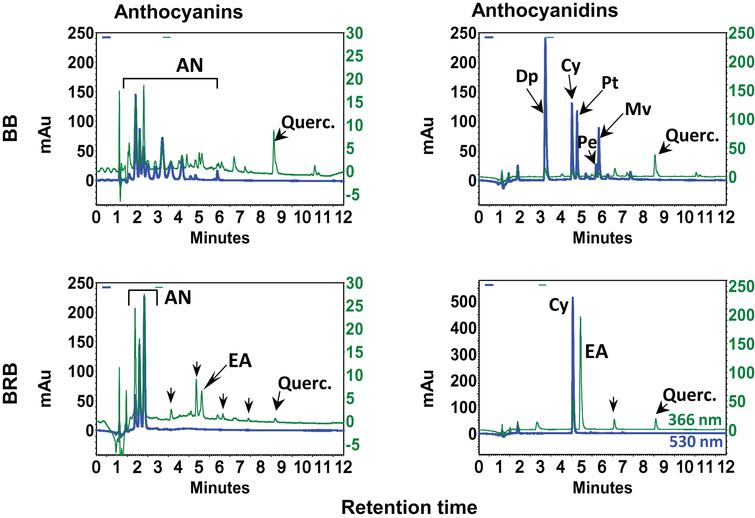 HPLC profiles of blueberry (BB) and black raspberry (BRB). Enriched hydrolyzed and non-hydrolyzed extracts (20 μl; 1mg/ml) were injected on a reverse phase C18 (250×4.6mm ID×5 μm) column in a gradient of acetonitrile and 3.5% aqueous phosphoric acid and analyzed using a photo diodarray detector in the range of 210–550nm. Chromatograms in the first column represent anthocyanins and other phenolics including free ellagic acid (EA) and quercetin monitored at 530 and 366nm, respectively. Chromatograms in the second column show anthocyanidins and other phenolics including free EA and quercetin. mAu, milliabsorbance units. Partially adopted from Journal of Agricultural and Food Chemistry, 2014, 62 (18), Aqil et al., Detection of anthocyanins/anthocyanidins in animal tissues, 3912–3918 with per-mission from American Chemical Society, Copyright © 2014.