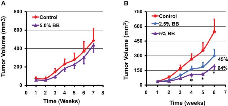 Effect of diet supplemented with indicated doses of blueberry (BB) powder administered before inoculating the tumor cells (A) and after establishment of the tumor cells (B) on the growth of human A549 lung cancer cell xenograft in nude mice. Mice (n=8) were fed either control diet (AIN 93M) or diet supplemented with blueberry powder (2.5 and 5% w/w) and euthanized after 7 weeks when tumor volume reached ∼600 mm3. Data represent mean±SE. p value<0.05 was considered significant (two-tailed Student's t test).