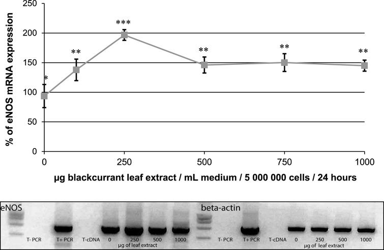 Effect of blackcurrant leaf extracts on eNOS mRNA expression in human endothelial EAHy926 cells (5×106 cells) after a 24h of incubation period with various concentrations of the extracts (0 to 1mg/mL). The results are expressed in % of expression and were normalized to β-actin mRNA expression taken as 100%. Data are shown as means±SD (n=3). Significant differences at p<0.05 are indicated by different numbers of *. Representative agarose gel showing the effect of 0, 250, 500 and 1000μg/mL of leaf extract on the expression level of eNOS and β-actin.