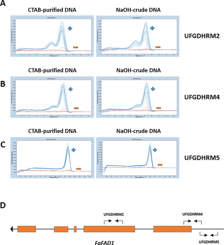 The detection of FaFAD1 using high-throughput HRM markers, UFGDHRM2, UFGDHRM4 and UFGDHRM5, in strawberry. Three primer sets were developed for HRM analysis. The HRM results from CTAB-DNA and NaOH-crude DNA extracts (5-fold dilution) were compared for three markers (A: UFGDHRM2, B: UFGDHRM4, and C: UFGDHRM5). BSA (0.1%) and PVP (1%) were included in all PCR reactions. The blue curve indicates presence of FaFAD1, while the red line indicates the absence (deletion) of FaFAD1. (D) The annotated FAD1 gene model from F. vesca was obtained from the Genome Database for Rosaceae (www.rosaceae.org). The primer location for three HRM markers was noted by black arrows.