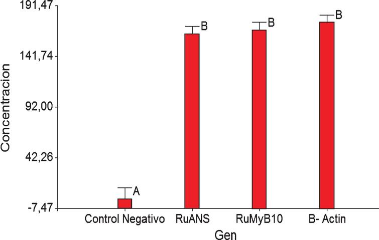 Tukey test data for β-Actin, RuANS and RuMYB10 genes present in Rubus niveus quantification.
