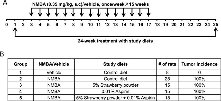 A prevention rat esophagus model was used to investigate the chemoprotective abilities of strawberry powder and aspirin. (A) Study protocol for the prevention model. Rats were subcutaneously injected with NMBA at 0.35mg/kg body weight or vehicle control once per week for 15 weeks. Different study diets were administered 2 weeks prior to the initial injection with NMBA, during the 15 weeks of injections, and for an additional 7 weeks after the last injection. (B) Group assignment of the different study diets.