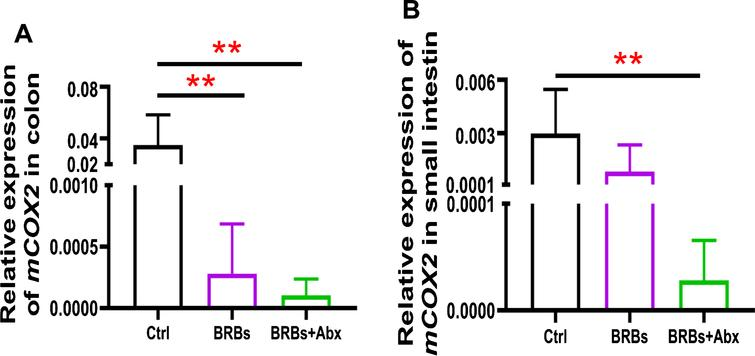 mRNA expression levels of COX2 in colon (A) and small intestine (B) of ApcMin/+ mice. Ctrl: control diet; Abx: antibiotics. ** p < 0.01.