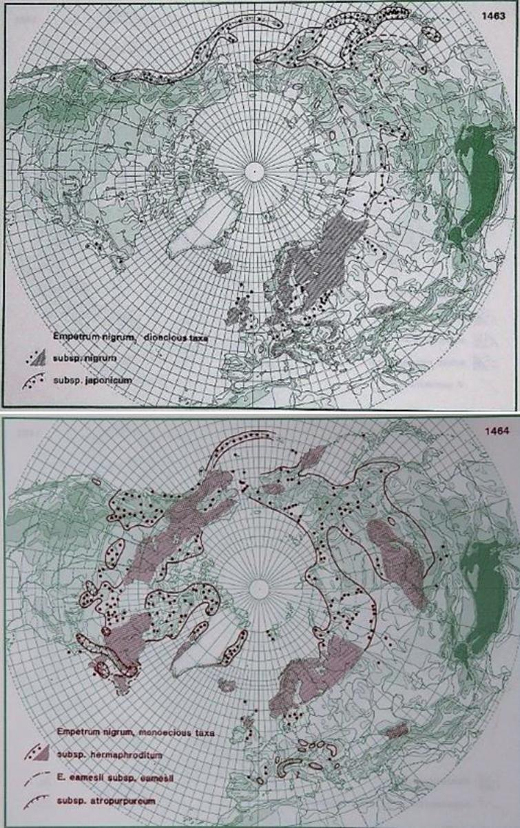 Distribution of E. nigrum L., E. nigrum ssp. nigrum and E. nigrum ssp. japonicum (upper photo) and E. nigrum ssp. hermaphroditum (lower photo) in the northern hemisphere (Hultén and Fries 1986), with the kind permission of Per Koeltz.