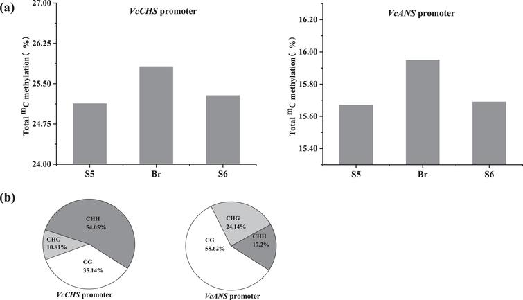 Specific DNA methylation status in the VcCHS and VcANS promoters during anthocyanin accumulation. a. Total cytosine methylation values in the VcCHS and VcANS promoters. b. Cytosine methylation values in percentage of CG, CHG and CHH motifs in the VcCHS and VcANS promoters.