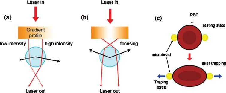 Optical tweezers used for measuring the deformability of red blood cells (RBCs) with focused laser beams that transfer (a) linear momentum or (b) angular momentum of light. (c) To measure the shear modulus of the RBCs, two microbeads are attached to the opposite sides of a RBC.