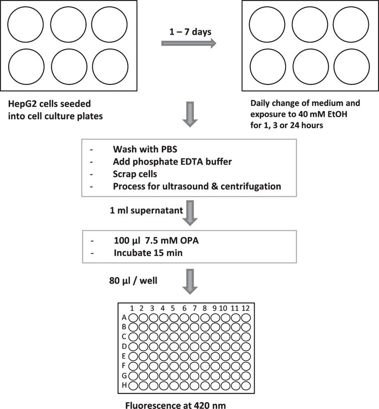 Workflow of GSH assay. For more details see text.