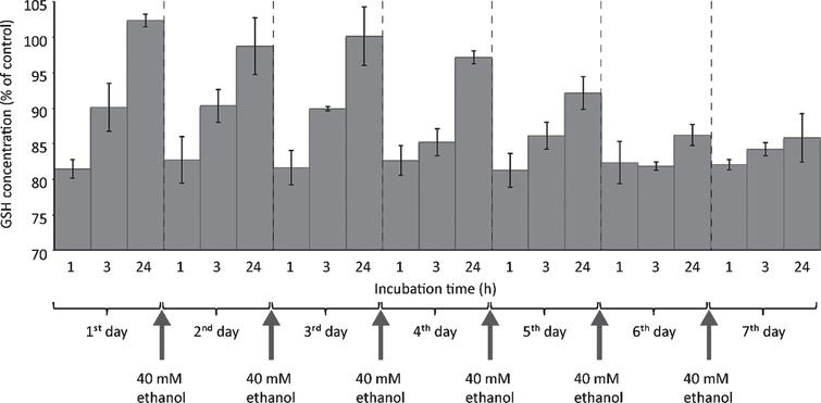 One-week ethanol exposure causes cessation of GSH regeneration capacity. HepG2 cells were seeded into 6 well plates and cultivated for 24 hours. Thereafter, medium was changed and cells were exposed to 40mM ethanol. For chronic ethanol exposure, cell culture medium containing 40mM ethanol was replaced daily until day 7. GSH consumption was evaluated 1, 3 or 24 hours after start of each new ethanol exposure. At the indicated time points, cells were harvested and further processed for fluorometric detection of GSH levels as described in Materials and Methods. Data are expressed as mean ± SD of three independent experiments performed in triplicates.