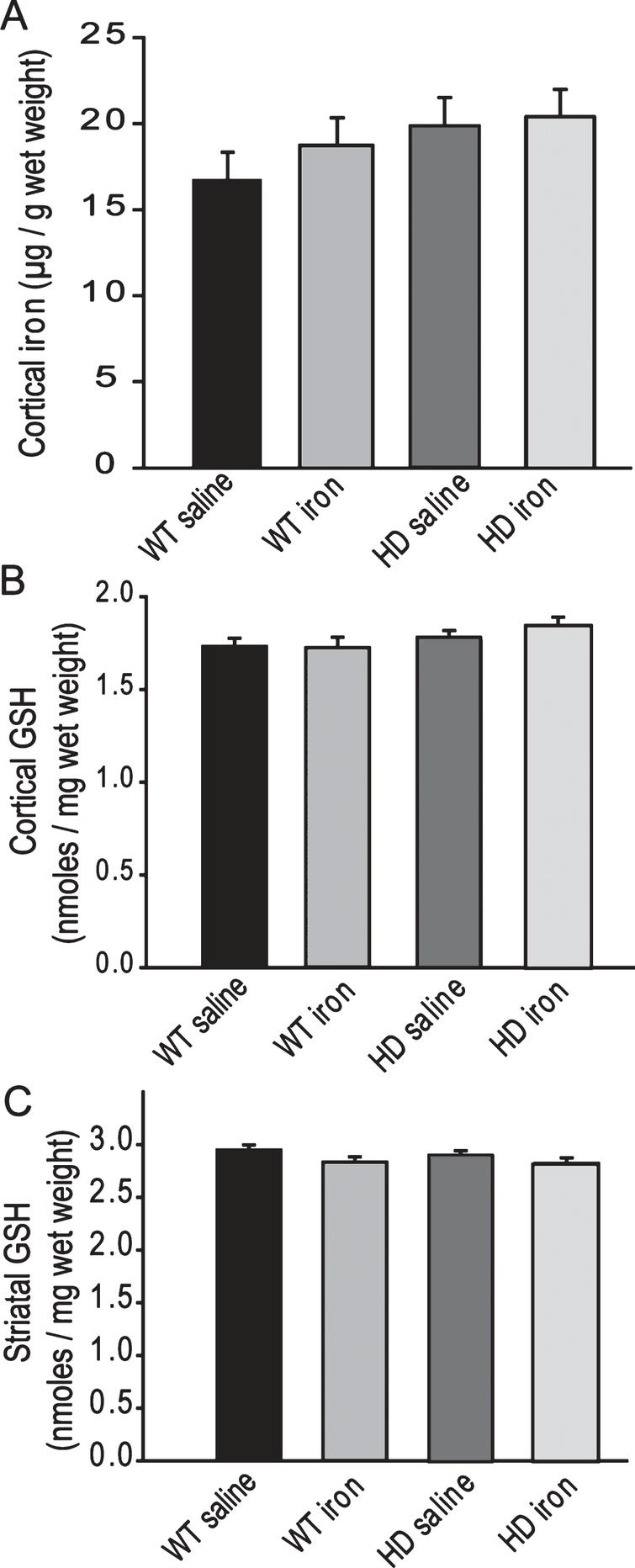 Neonatal iron supplementation does not alter brain iron or glutathione. Mice were supplemented at 10–17 days and sacrificed at 1-year of age. A. Cerebro-cortical iron is not altered by HD or the presence of neonatal iron supplementation. n=6–7, B-C. Glutathione levels in cerebral cortex (B) and striatum (C) are not altered by HD or neonatal iron supplementation. n=9–15 for cortex and 9–12 for striatum.