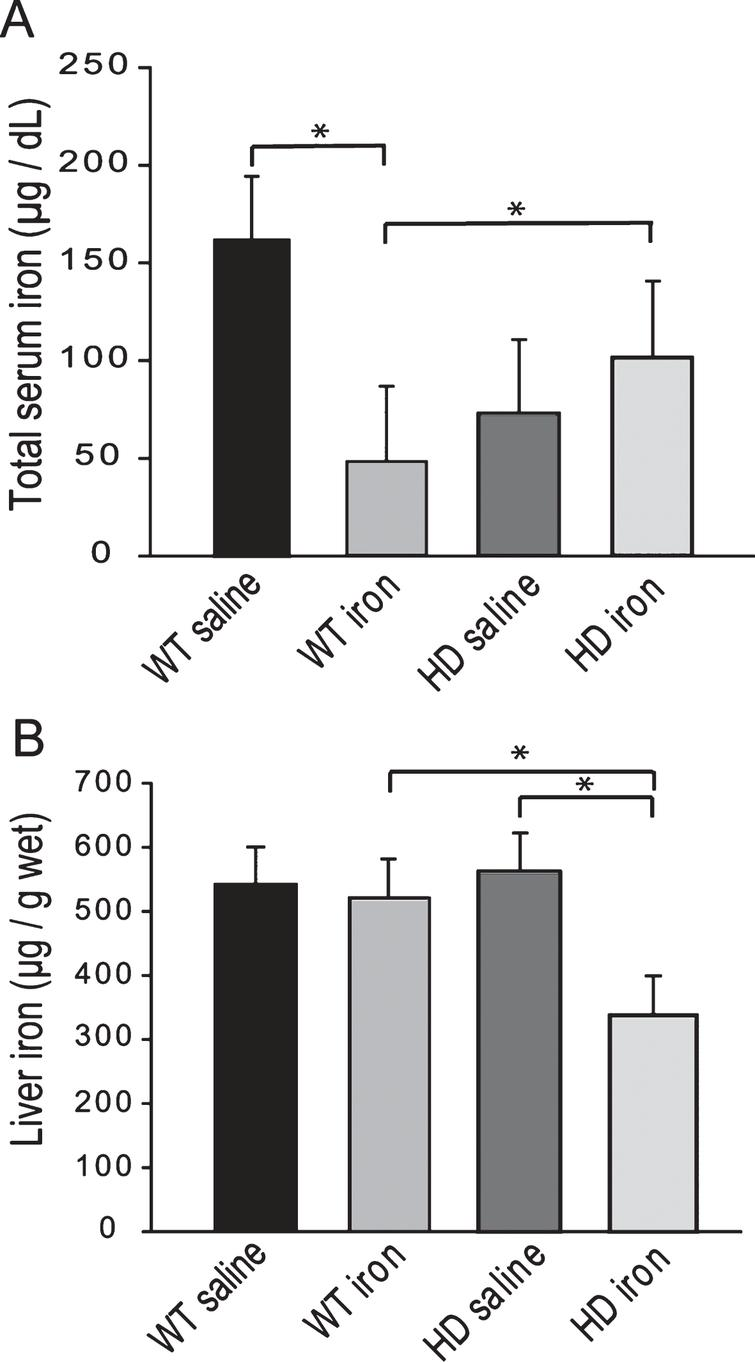 YAC128 HD mice have an altered peripheral response to neonatal iron supplementation. Mice were supplemented at 10–17 days and sacrificed at 1-year of age. A. Neonatal iron supplementation results in decreased serum iron at 1-year of age in wild-type but not YAC128 HD mice. n=8–10, B. Iron-supplemented YAC128 HD, but not wild-type mice have significantly decreased liver iron at 1-year of age. P-value: *p<0.05, n=12–13.