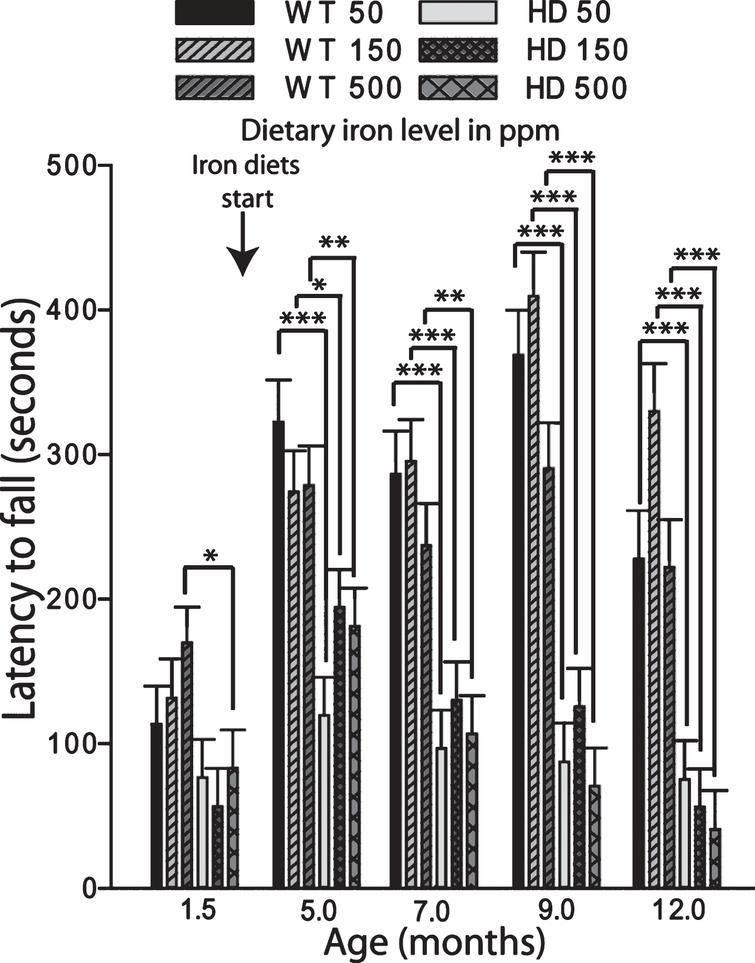 Adult iron supplementation does not alter rota-rod motor endurance in YAC128 HD mice. Mice were maintained on special diets from 2–12 months of age. YAC128 HD groups performed significantly worse on the rota-rod compared to respective iron-dose wild-type mouse groups. Iron supplementation had no effect on performance. P-values: *p<0.05, **p<0.01, ***p<0.001, n=19–24.