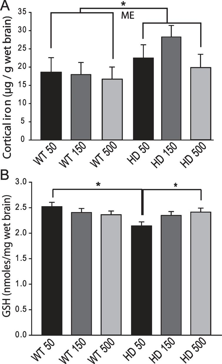 Brain iron and glutathione status in YAC128 HD mice supplemented with different levels of iron as adults. Mice were maintained on diets from 2–12 months of age. A. Cerebro-cortical iron levels are increased in HD mice but are not altered by iron-intake level. There was a significant effect of genotype (ME = main effect comparison). n = 5–9, B. Cortical GSH in wild-type is not altered by iron-intake level. Low versus high iron intake (150 and 500 ppm iron, respectively) results in decreased cortical glutathione in YAC128 mice. P-value: *p < 0.05, n = 9–11.