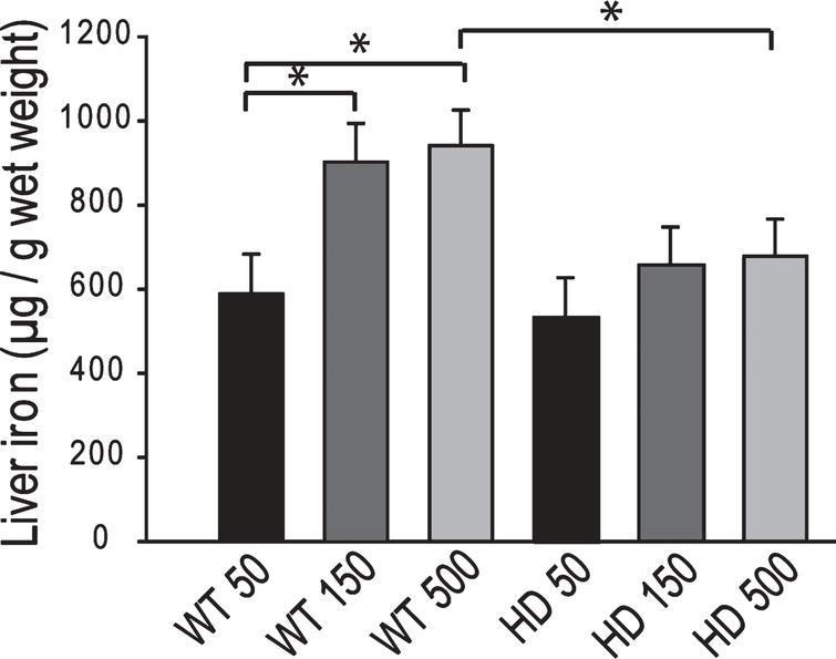 YAC128 HD mice have an altered peripheral response to adult iron intake level. Medium and high dietary iron intake levels in adult mice (150 and 500 ppm, respectively) results in increased liver iron in wild-type but not YAC128 HD mice at 1-year of age. P-value: *p < 0.05, n = 12–15.