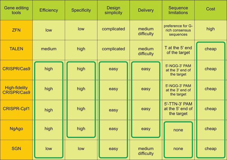 Table of gene editing tools survey for disease modeling. Advantages of the tools are marked in green frames.