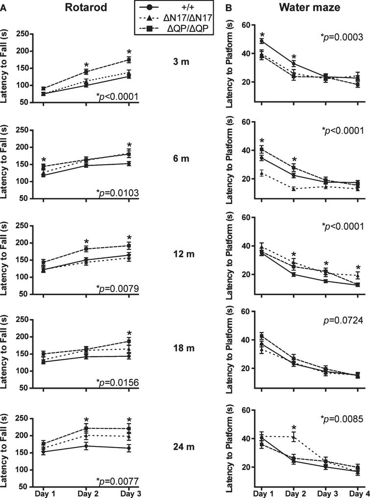 Behavioral analyses of the homozygous domain deletion mice. (A) HttΔQP/ΔQP (ΔQP/ΔQP) mice consistently out-performed Htt+/+ (+/+) littermates on the accelerating rotarod at 3 (p<0.0001), 6 (p=0.0103), 12 (p=0.0079), 18 (p=0.0156), and 24 months of age (p=0.0077, 2-way ANOVA). (B) In the acquisition phase of the Morris water maze test, both HttΔQP/ΔQP and HttΔN17/ΔN17 (ΔN17/ΔN17) mice were able to navigate to the platform more quickly than controls at 3 months of age (p=0.0003, 2-way ANOVA). HttΔN17/ΔN17 mice continued to find the platform more quickly than controls at 6 months (p<0.0001, 2-way ANOVA), but by 12 months (p<0.0001, 2-way ANOVA) and 24 months of age (p=0.0085, 2-way ANOVA) they were slower to learn the location of the platform during the acquisition phase. The numbers of mice tested for each genotype at each specific age are listed in Supplementary Table 1.
