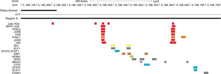 Identified TFBS in region 9, corresponding to intron 5 of the HTT gene. Predicted TFBSs in putative regulatory region 9. TFBSs are color coded according to their interacting group (Fig. 2). STAT1 was identified in this region and selected for further in vitro analysis. Figure adapted from UCSC Genome Browser.