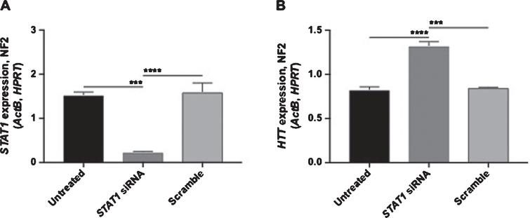 siRNA-mediated knockdown of STAT1 increases HTT promoter expression. RT-qPCR for STAT1 (A) and endogenous HTT (B). Data is normalized to a normalization factor of 2 (NF2), with genes utilized indicated on the Y-axis. For each treatment n=3. One-way ANOVA with Tukey post test, ***p<0.001, ****p<0.0001 (mean±SEM).