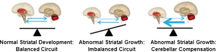 Model of cerebellar compensation of the abnormally developed striatum in HD. The compensation allows for normal motor function and maintains the striatum in mutant steady state.