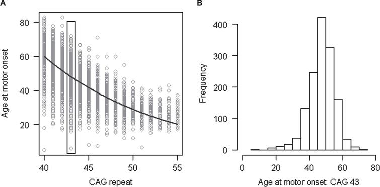Relationship of age at motor onset with CAG repeat. A. Age at onset of motor signs estimated by raters (Y-axis) is compared to the size of uninterrupted CAG repeat (X-axis) for subjects with inherited CAG sizes of 40–55 repeats. Each circle represents a HD subject participating our recent onset modifier GWA study [37]. B. Age at onset of motor signs for the subset of HD subjects who inherited 43 CAGs (∼15.5% of the total data set) is plotted to show the wide variability in clinical manifestation due to factors other than CAG repeat length.