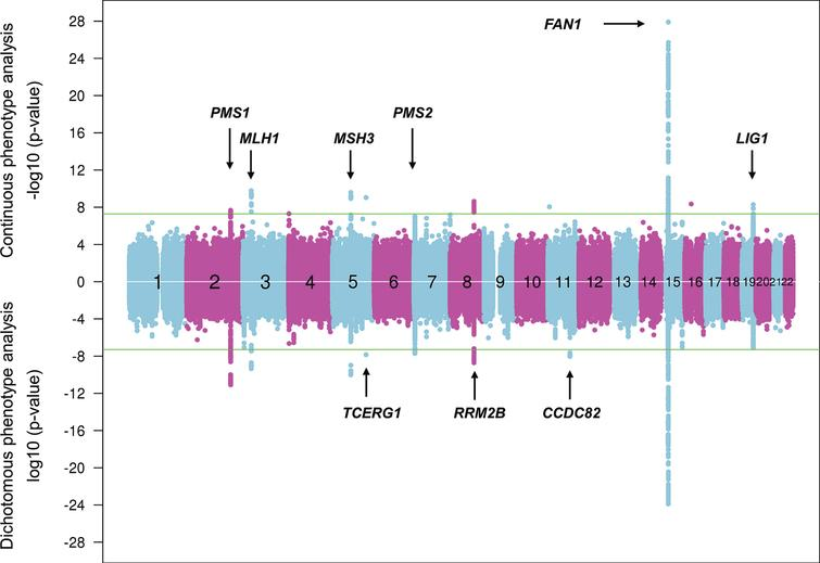 Continuous and dichotomous GWA analysis of European-ancestry HD subjects. The levels of significance for each test SNP (circles) across the genome are mirrored for both continuous phenotype (top portion) and dichotomous phenotype (bottom portion) for ease of comparison. Numbers in the middle of the plot represent chromosomes, and horizontal lines indicate genome-wide significant p-values. The loci harboring genes involved in DNA maintenance/repair process are labeled only in the upper panel while those loci harboring genes not known to be central to these processes are labeled only in the lower panel.