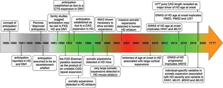 Timeline of some of the key events establishing anticipation as a genuine biological phenomenon and somatic expansion as contributing toward HD pathology.