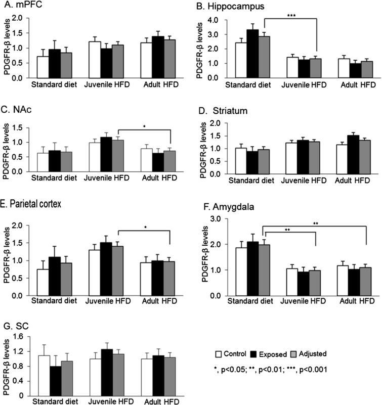 Comparisons of PDGFR-β levels in 7 brain regions among 3 diet groups in male offspring: juvenile HFD, adult HFD, and standard diet groups. Brain regions: prefrontal cortex (mPFC) (A), hippocampus (B), nucleus accumbens (NAc) (C), striatum (D), parietal cortex (E), amygdala (F), and superior colliculus (SC) (G).