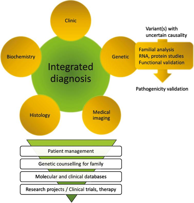 Close integration of clinical, biochemical, medical imaging, histopathological and genetic data for an integrated diagnosis. The whole process implies a great expertise in each disease/gene and in particular may require an expert molecular laboratory for final interpretation of sequence variants. The diagnosis may result in specific patient management including potential existing therapies, and should allow in any case genetic counselling within the family (carrier, predictive, prenatal or pre-implantation testing). Inclusion of data into molecular and clinical databases is a pre-requisite for patients recruitment in clinical trials and to allow development of research projects on the disease.