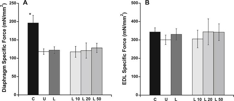EDL and diaphragm force measurements. A) Normalized maximal contractile force in diaphragm muscle was only significantly higher in C57BL/10 compared with untreated het mice. B) EDL specific force showed no significant differences between the treatment groups. C: C57BL/10 wild-type control mice (n=10); U: untreated het mice (n=10); L: all 3 groups of lisinopril-treated het mice (n=18); and L10, L20, L50=groups of het mice treated with lisinopril at 3 different (10, 20, and 50mg/kg × day) dosages (n=6 per group). Data are shown as means  ±  SEM. *indicates a significantly higher value compared to the untreated het group, via ANOVA followed by a Dunnett post-hoc test, P=0.0009.