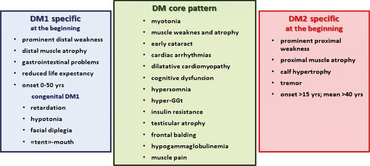 Myotonic dystrophies are multisystemic diseases with a core pattern of clinical presentation which also presents a number of dissimilar features making them clearly separate diseases.