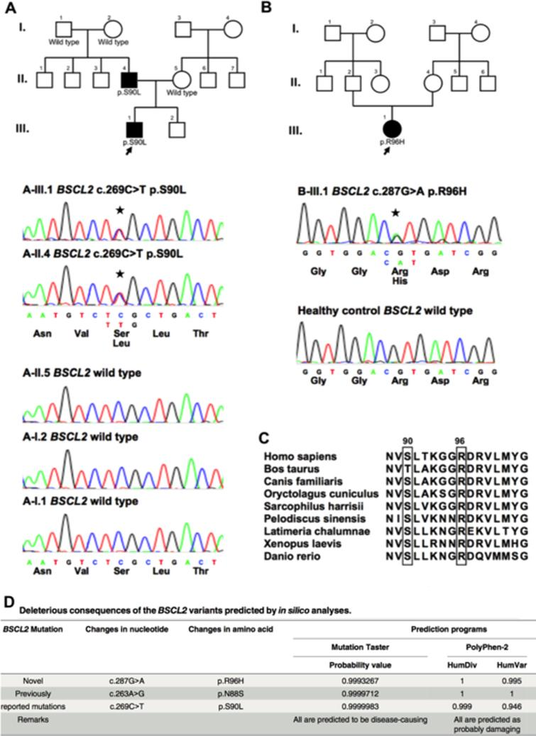 Fig. 1. The pedigrees and sequencing data of the two families carrying BSCL2 mutations, and the characteristics of the novel p. R96H mutation.