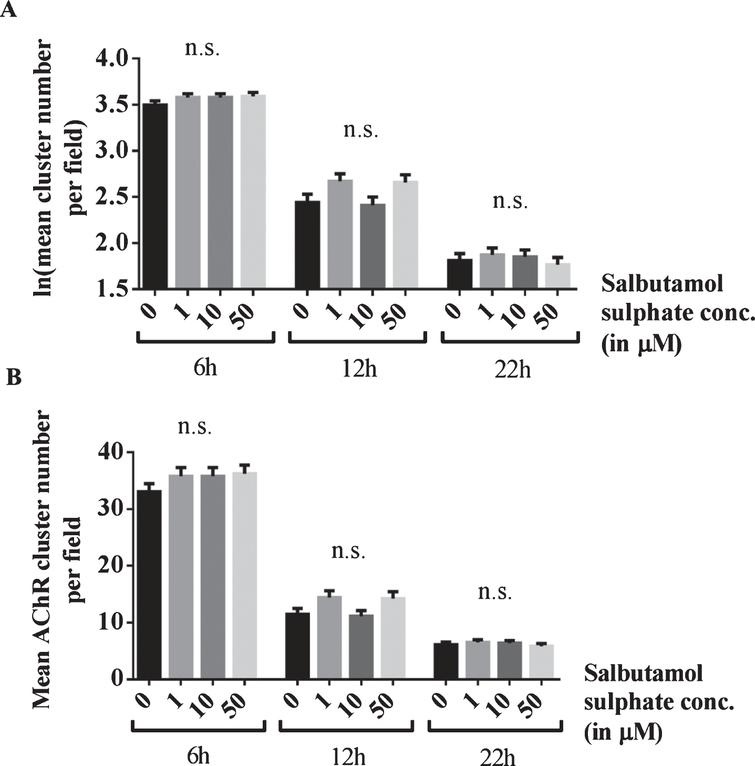 Blocking of the effects of salbutamol on AChR clusters after agrin wash-off by inhibition of ADRB2 s. (A) C2C12 WT myotubes were incubated with short rat agrin overnight. After agrin wash-off, AChR clusters were left for dispersal for 6, 12 or 22 h, during which myotubes were incubated with a mix of 0, 1, 10 or 50 μM salbutamol sulphate and 1 μM ICI-118,551. The ADRB2 inhibitor abolished the stabilising effect of salbutamol on AChR clusters and no difference occurred between salbutamol-treated and untreated cells (6h: difference = 0.08, SE = 0.06, p = 0.47, difference = 0.08, SE = 0.06, p = 0.47, and difference = 0.09, SE = 0.06, p = 0.3, 12h: difference = 0.23, SE = 0.1, p = 0.06, difference = 0.03, SE = 0.1, p > 0.99, and difference = 0.22, SE = 0.1, p = 0.08, and 22h: difference = 0.06, SE = 0.11, p > 0.99, difference = 0.04, SE = 0.11, p > 0.99, and difference = 0.04, SE = 0.11, p > 0.99) (B) Data shown in A back-transformed into cluster numbers. N = 3 (6 h), N = 2 (12 h and 22 h). Error bars indicate the standard error of the mean. n.s.p > 0.05.