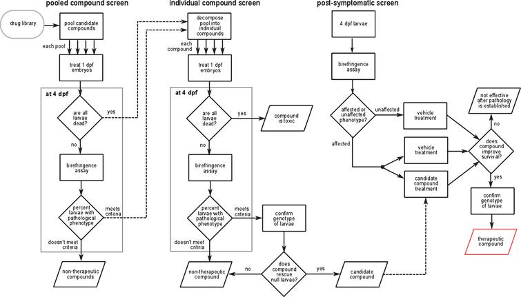 A summary of the work-flow used by Kawahara et al. [77] to screen for novel drug candidates. Similar work-flows have been used by others to identify potential therapeutics for DMD and LGMD2I [99, 120]. See text for details.
