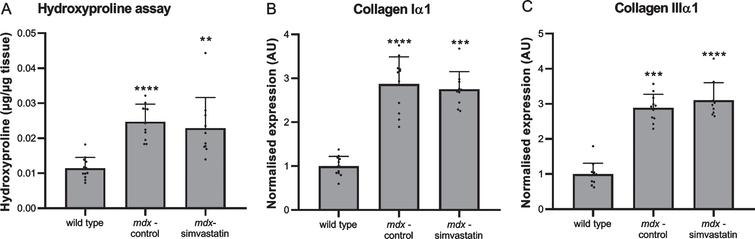 Fibrosis. Diaphragm of 24–week old mice after 12 weeks of simvastatin treatment. (A) hydroxyproline content. (B–C) expression of collagen type I (B) and III (C) (n=10–12). **p<0.01, ***p<0.001, ****p<0.0001 compared to wild type mice.