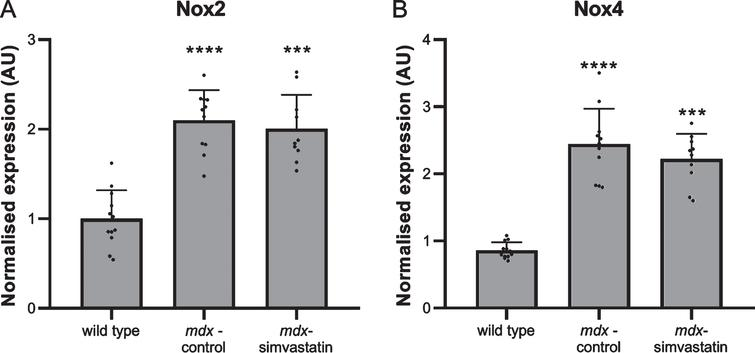 Oxidative stress. Expression of (A) Nox2 and (B) Nox4 in the diaphragm of 24–week old mice after 12 weeks of simvastatin treatment (n=10–12). ***p<0.001, ****p<0.0001 compared to wild type mice.