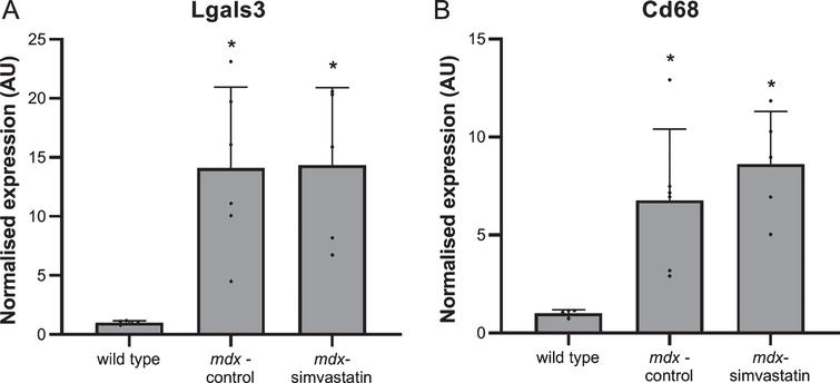 Inflammation. Expression of (A) Lgals3 and (B) CD68 in the diaphragm of 16-week old mice after 12 weeks of simvastatin treatment (n=5–6). *p<0.05 compared to wild type mice.