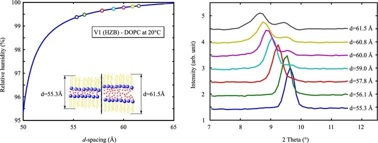 Bragg reflections from a DOPC lipid bilayer at 20°C (right). Calculated d-spacings of each measurement are shown on the left up to 99.9% RH. Above a d-spacing of 59 Åsplitting occurs, which may indicate two domains in the sample.